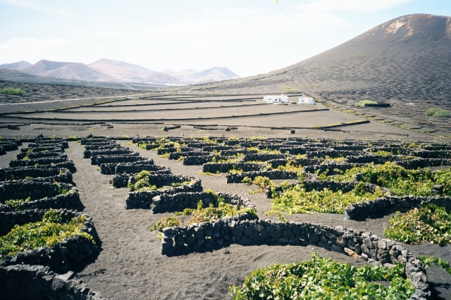 Arenaments artificials a Lanzarote. Font: Wikipedia. [Consulta: 16/02/2017]